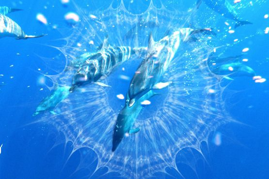 bildhauer dolphins 13 555x370 - Dolphins & Whales