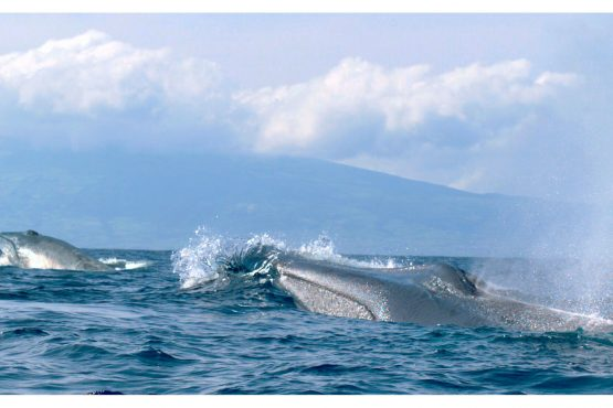 bildhauer dolphins 6 555x370 - Dolphins & Whales