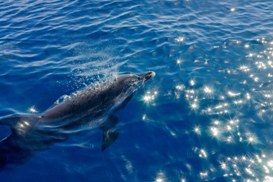 bildhauer dolphins 9 555x370 - Dolphins & Whales