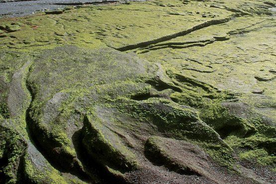 bildhauer nature 12 555x370 - Nature