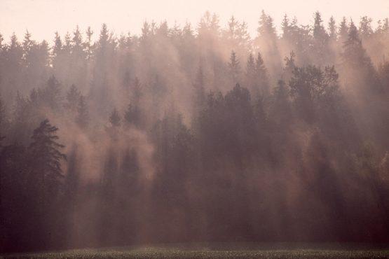 bildhauer nature 14 555x370 - Nature