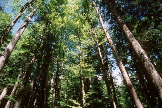 bildhauer nature 15 555x370 - Nature