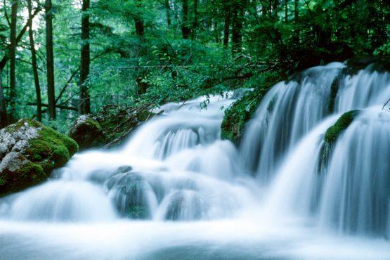 bildhauer nature 17 555x370 - Nature