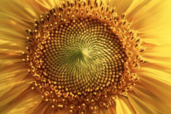 bildhauer nature 18 555x370 - Nature
