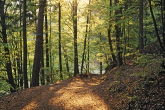bildhauer nature 20 555x370 - Nature