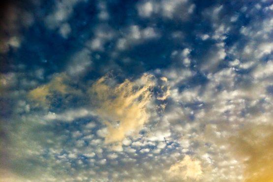 bildhauer nature 23 555x370 - Nature
