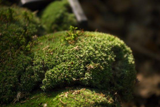 bildhauer nature 27 555x370 - Nature