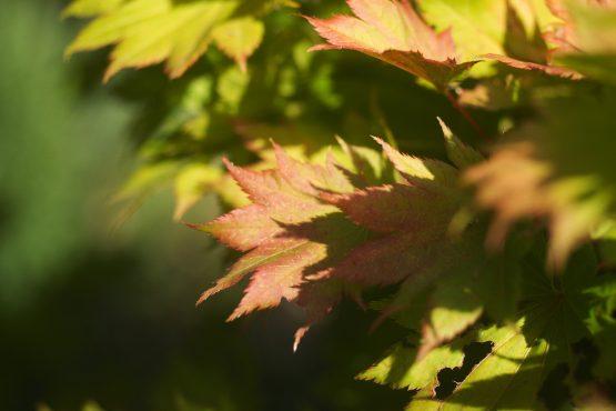 bildhauer nature 28 555x370 - Nature