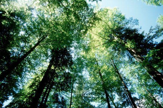 bildhauer nature 6 555x370 - Nature