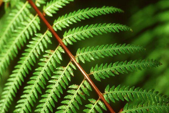 bildhauer nature 1 555x370 - Nature
