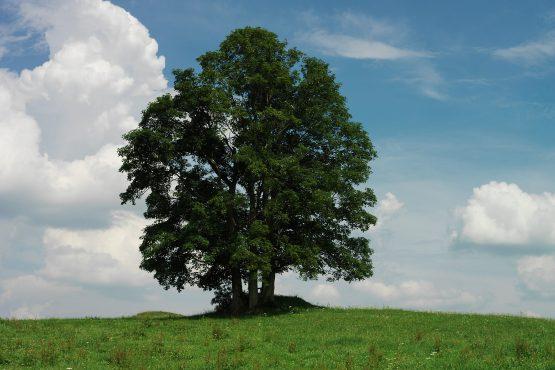 bildhauer nature 24 555x370 - Nature