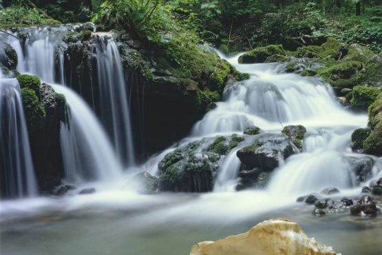 bildhauer nature 33 555x370 - Nature
