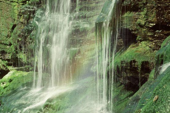 bildhauer nature 4 555x370 - Nature